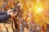 Herfstbladeren en herfstsfeer in Italië